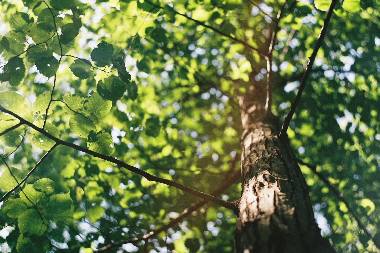 milieuvriendelijke beeldschermen - Kimeru